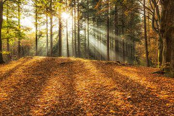 Stralen licht tussen de bomen op een mooie herfstdag in het Speulderbos van Paul Weekers Fotografie