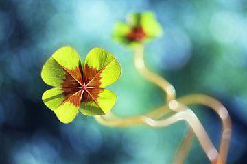 Lucky clover von Michelle Zwakhalen
