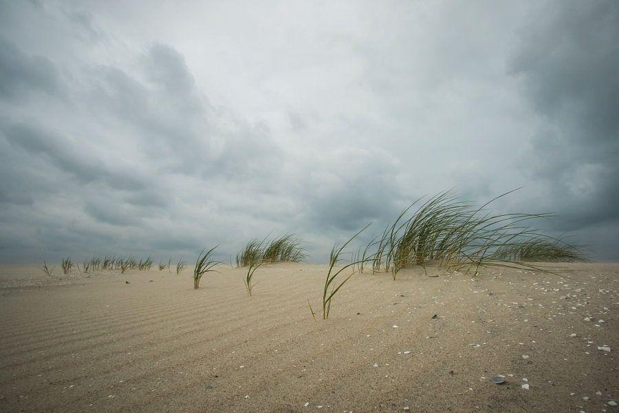 Strandweer van Sander Meertins