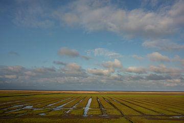 Kwelders in Noord-Groningen van Bo Scheeringa Photography