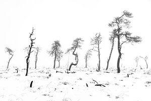 De skeletbomen van Noir Flohay van