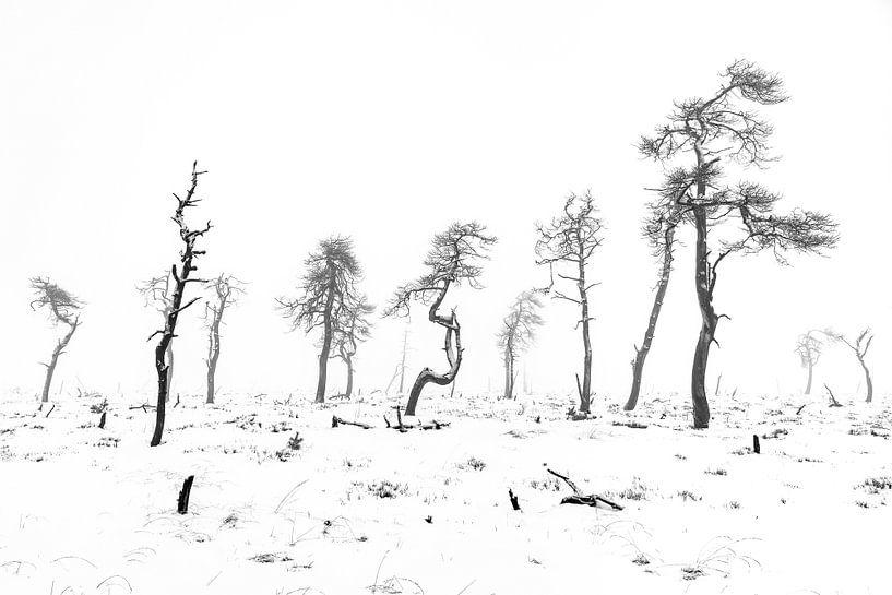 De skeletbomen van Noir Flohay van Etienne Hessels