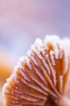 Paddenstoel onder een laagje van ijskristallen van Willy Sybesma