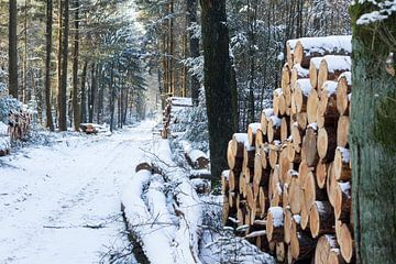 Winter in de bossen. van Rijk van de Kaa