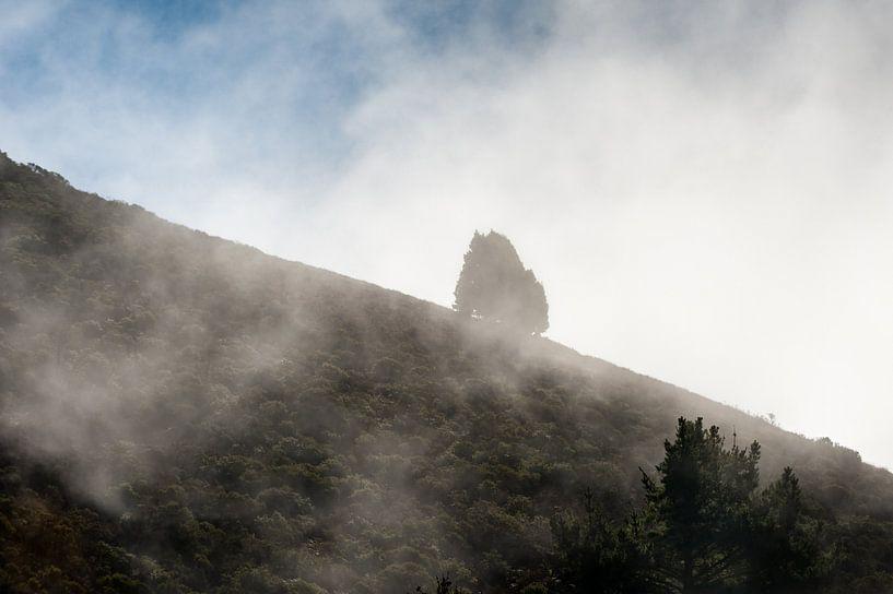 In de mist sur Wim Slootweg