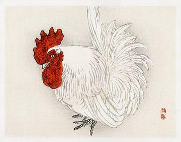 Rooster van David Potter
