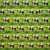 Koeien, koeien, koeien van Ruben van Gogh thumbnail