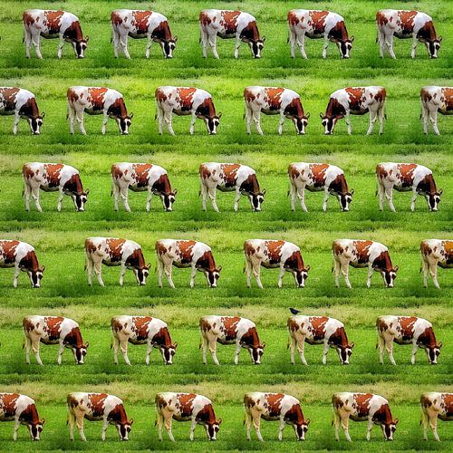 Koeien, koeien, koeien