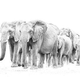 Elefantenherde von Robert Styppa