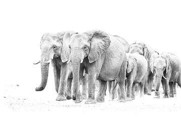 kudde olifanten van Robert Styppa