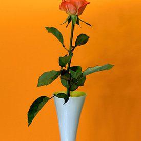 Rode roos in witte vaas met oranje achtergrond van W J Kok