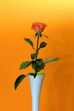Rote Rose in weißer Vase mit orangem Hintergrund von W J Kok