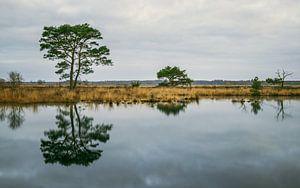 Nationaalpark Dwingelderveld