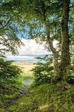 Uitzicht over de korenvelden vanuit het bos op de heuvel von Tony Buijse