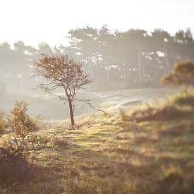 Duinlandschap zonsopkomst tilt shift van Karel Ham