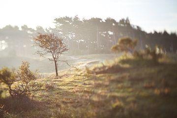 Duinlandschap zonsopkomst tilt shift van