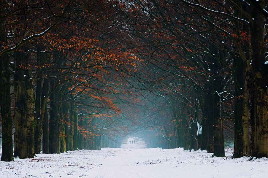 Winter Colors van Martin Podt
