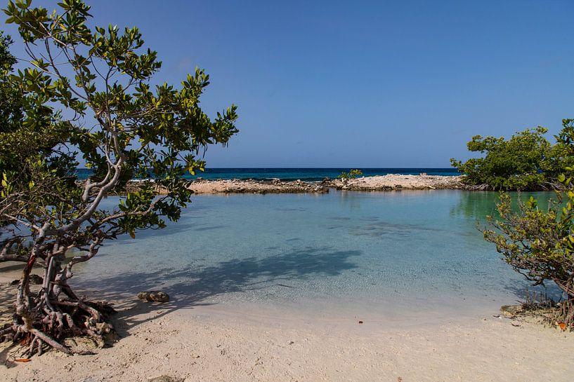 Kleine mangrove, Curaçao van Willemke de Bruin