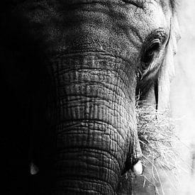 Portret olifant (zwart/wit) van Jacqueline Gerhardt