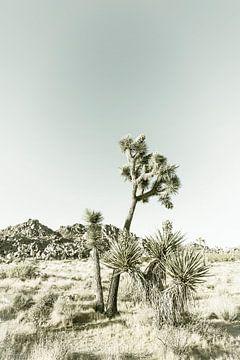 Vintage Joshua Tree van Melanie Viola