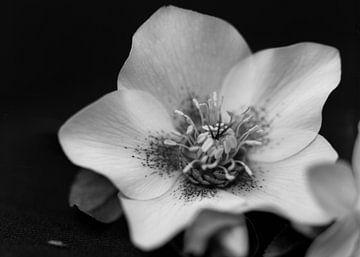 Analoge bloem van Michelle Rook