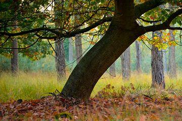 Strabrechtse Heide 261 van Deshamer