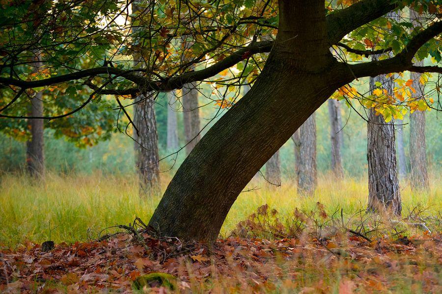 Strabrechtse Heide 261 van Desh amer