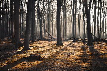 Forêt sur Arnold Maisner