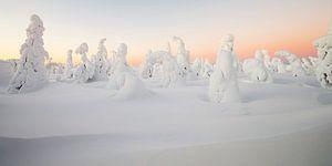 Zonsopkomst in een winters landschap
