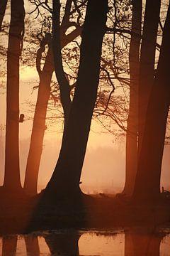 Sonnenaufgang von Jana Behr