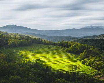 Sonne scheint auf Terrassenfeld von Patrik Lovrin