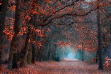 Autumn Mood sur Brigitte van Krimpen