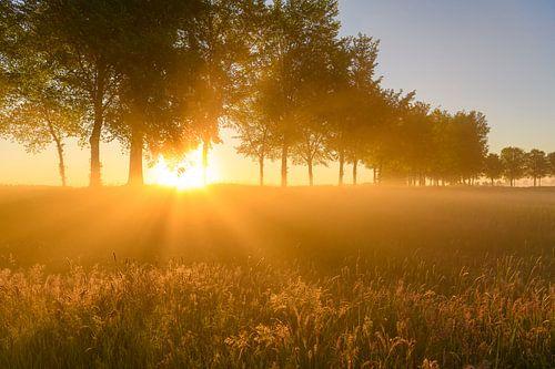 Vroege zonsopkomst tijdens een mooie lentedag over de Zwartendijk bij Kampen