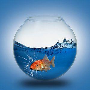 Der Goldfisch im Glas