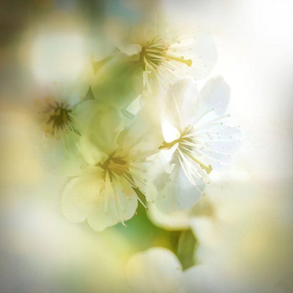 Blossom Style van Andreas Wemmje