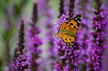 Oranje-zwarte distelvlinder op paarse bloemen van Daniëlle Beckers