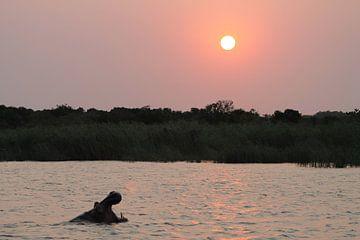 nijlpaard in afrika van Christiaan Van Den Berg