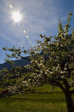 Suisse sur Wendy Tellier - Vastenhouw