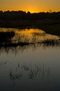 Goldener Sonnenaufgang von René Wolters