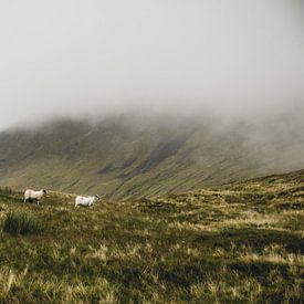 Des moutons dans les nuages sur Oscar van Crimpen