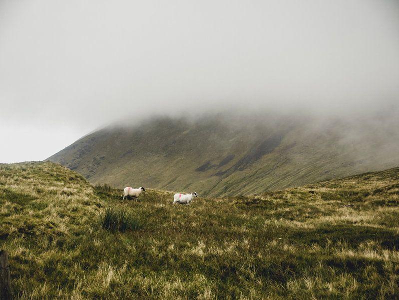 Schafe in den Wolken von Oscar van Crimpen