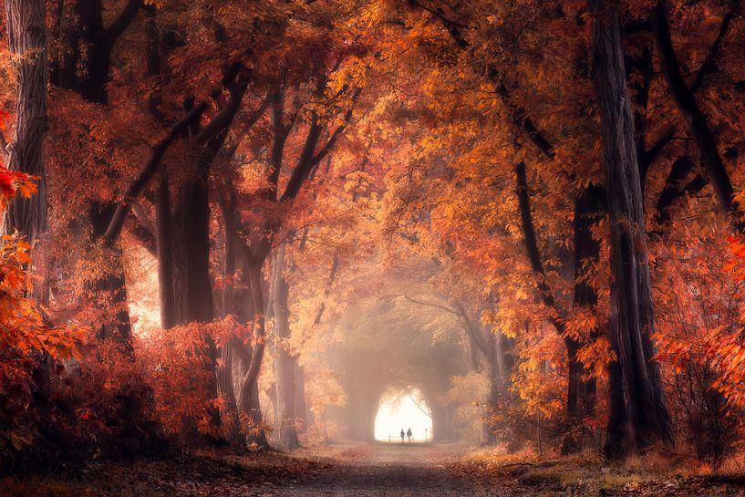 Red forest van Edwin Mooijaart