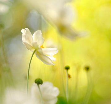 Anemonen von Corinne Welp
