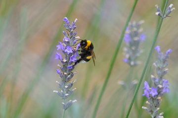 De bloemetjes en de bijtjes van Iris van der Pol