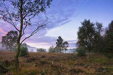 Heidelandschaft am morgen von Edith Albuschat