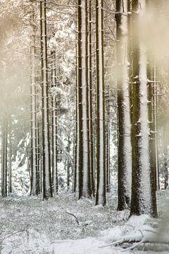 Neige contre les pins sur Arjen Hartog