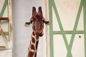 Funny Giraffe van Angelica Bouwmeester