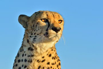 Gepard von Loulou Beavers