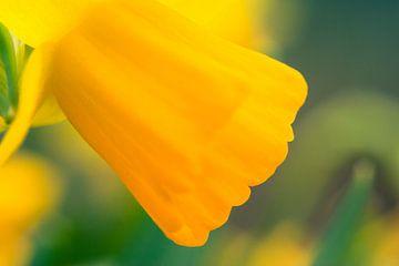 Narcis von Melle van der Wildt