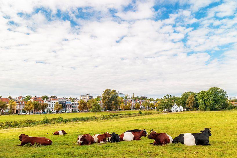 Park Sonsbeek in Arnhem van Martin Bergsma